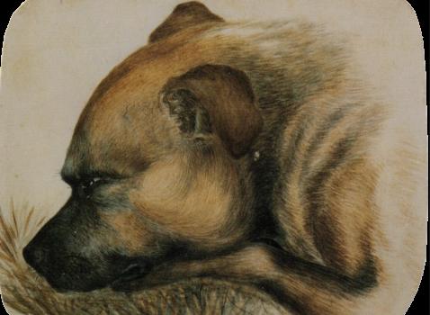 Emily Bronte's Bullmastiff Keeper