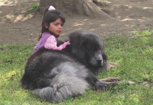 Tibetan Mastiff Bodhi and friend