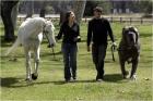 A Neapolitan Mastiff as big as a horse? Really?