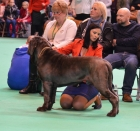 Denise Flaim watching Neos at Crufts