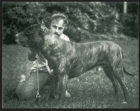 John Swinford and his Bandog, Bantu.