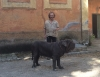 Uberto Gasche and Neapolitan Mastiff in the heart of Rome