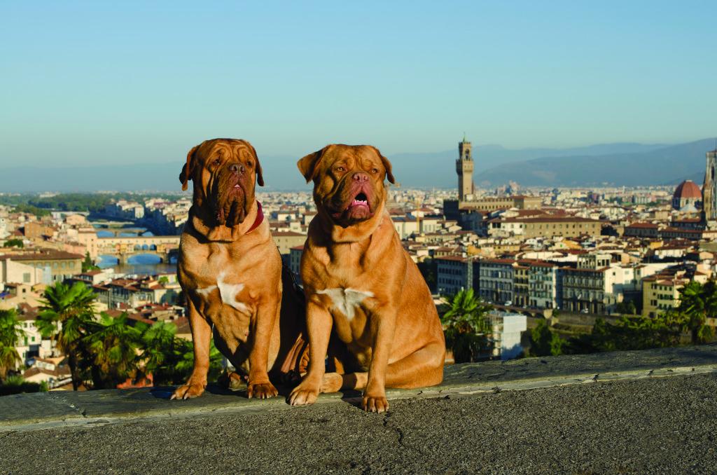 Dogue de Bordeaux TRAVEL Florence_Italy_city_view