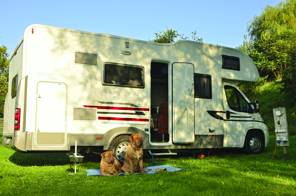 Vacationing with dogs – not to mention Dogues – and traveling in a motorhome are both relatively uncommon in Russia.