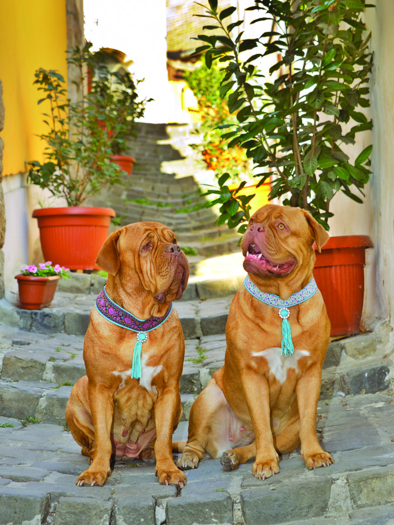 The girls in their fancy collars in the riverside town of Szentendre in Hungary.