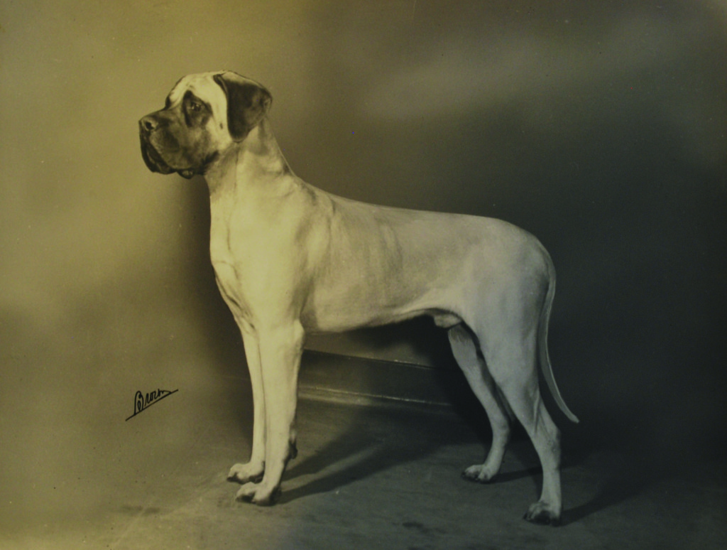 Another of Moore's many British imports, Havengore Comedian of Mansatta, at 14 months.