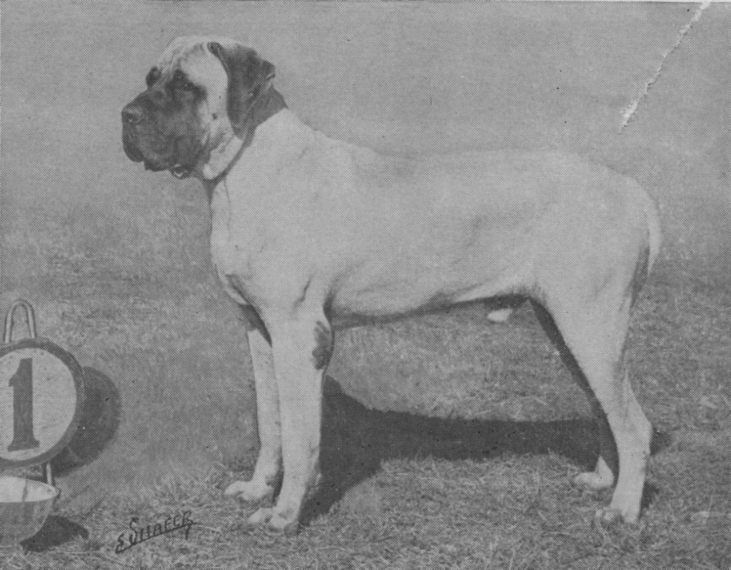 Ch. Rhinehart of Blackroc (Ch. Drake of Havengore x Gipsy of Havengore), arguably Moore's best-known dog, was the first Mastiff to be a dual American/English champion.