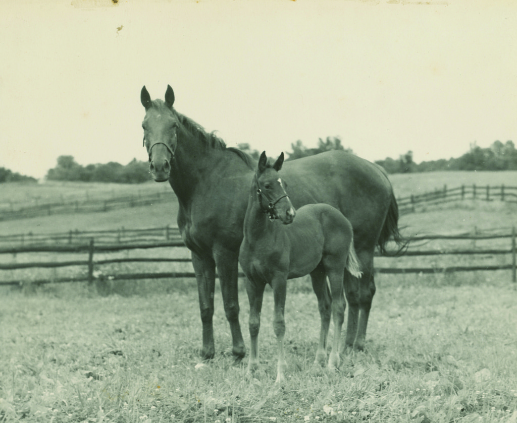 Mastiff Marie Moore Gallorette with foal