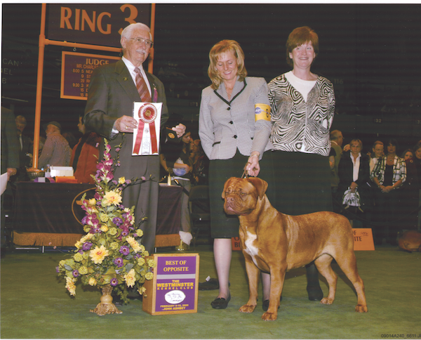 Northland's Molly, going Best of Opposite at Westminster in 2009, the breed's first time showing at the Garden. Judge is Charles Trotter.