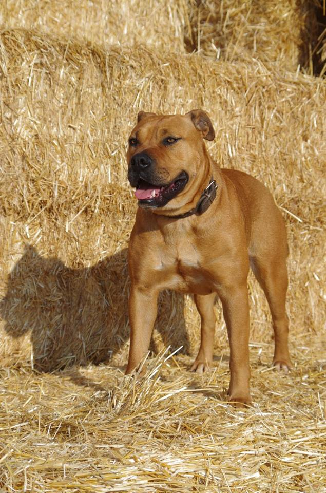 Flor de Can Pioro, bred by the Can Pioro kennel in Spain.