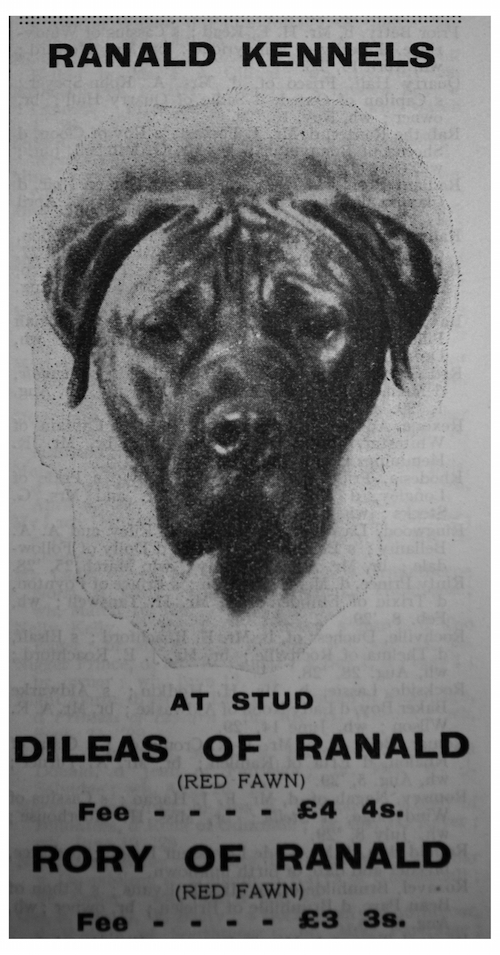 bullmastiff-ranald-1