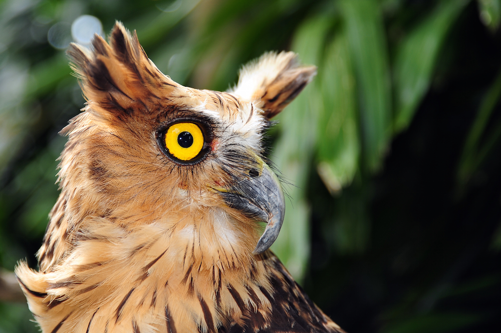 Many birds of prey have light eyes. But does color have anything to do with night vision?