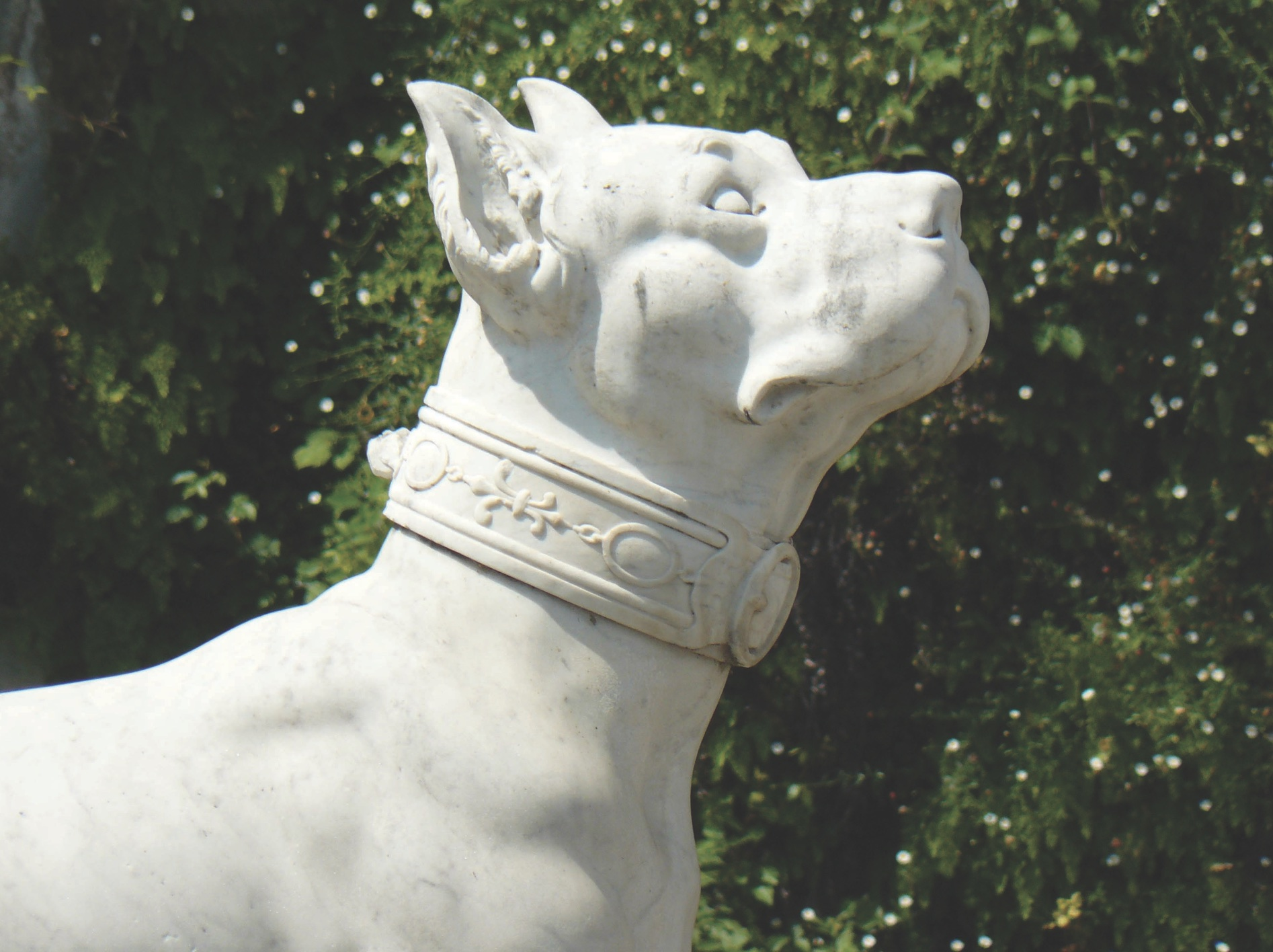 The well-developed masseter muscles and slightly shorter muzzle are typical of Cane Corso type.