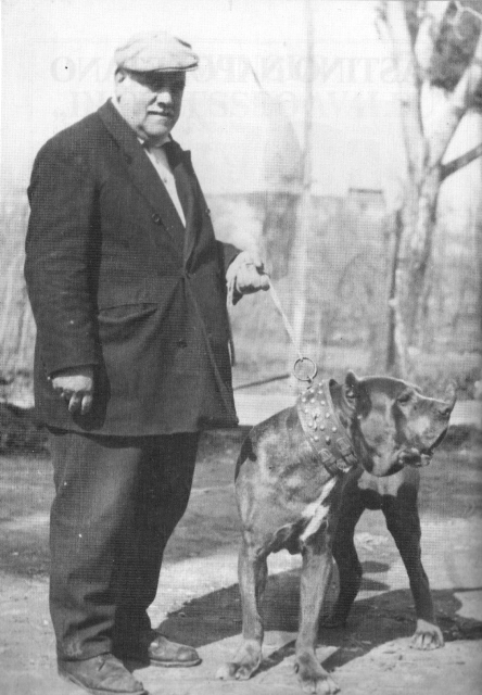 Carlo Simeoli, another well-known mastinaro who used Masaniello as a stud dog, with great effect, 1950s.