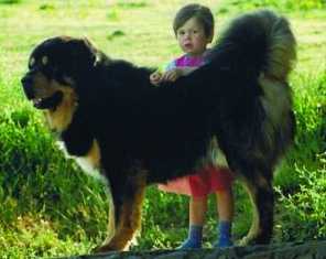 Chortens Ben Sharbaz, Best of Breed at Crufts in 1992, and the only British-bred TM to earn the World Winner title.
