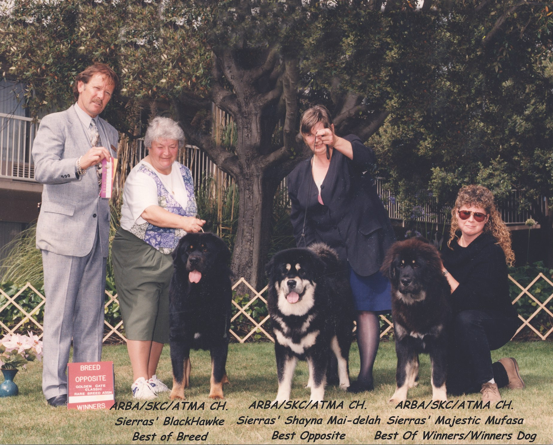 At the 1995 Golden Gate San Francisco ARBA show, under judge Warren Rice of Australia. From left, BOB Sierras' BlackHawke; Best of Opposite, Sierras' Shayna Mai-delah; and one of their get, Best of Winners/Winners Dog Sierras' Majestic Mufasa. As the show was in August, the dogs are not in full coat.
